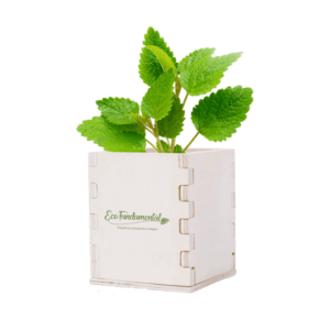 Kit personalizável para semear