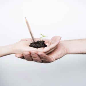 Lápis plantável Sprout