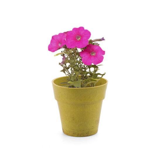 vaso biodegradável com flores