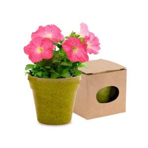 vaso biodegradável verde com sementes