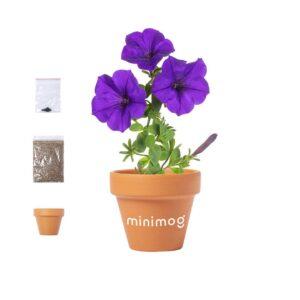 kit de plantação de vaso terracota com sementes de petúnia